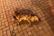 Odgovornost za trovanje pasa ?